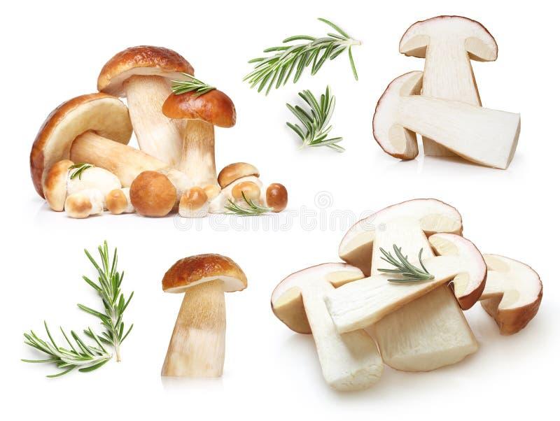 被隔绝的牛肝菌蕈类可食蘑菇 免版税库存图片