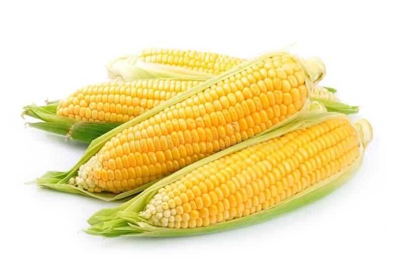 被隔绝的玉米 库存图片