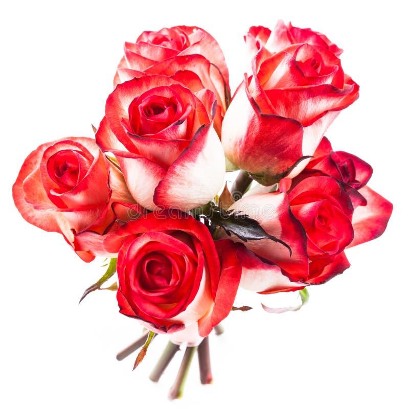 被隔绝的玫瑰 免版税库存图片