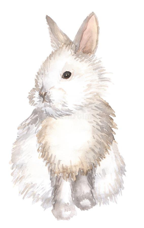 被隔绝的白色兔子 皇族释放例证