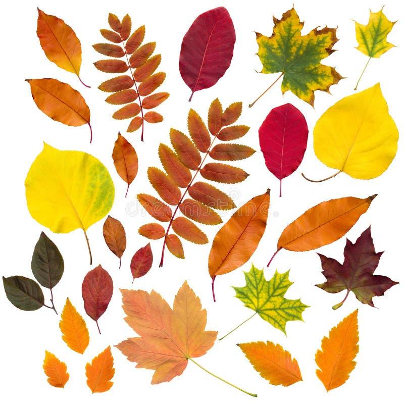 被隔绝的秋叶收藏 免版税图库摄影