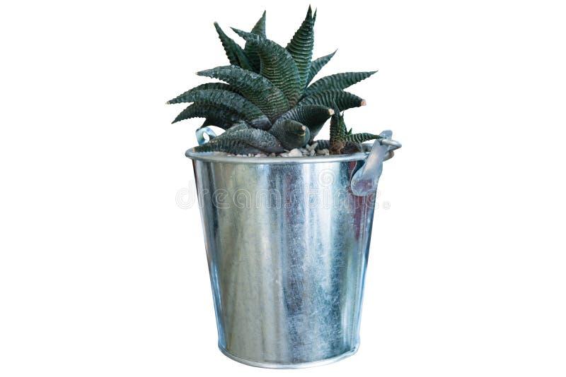 被隔绝的罐的仙人掌植物 免版税图库摄影