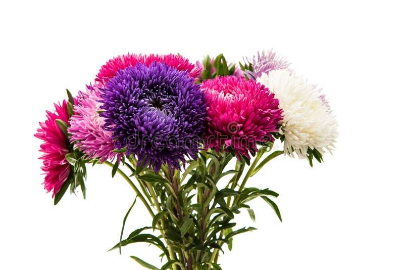 被隔绝的美丽的菊花 免版税库存图片