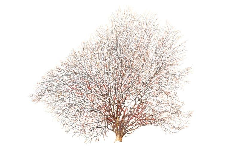 被隔绝的老和死的树 库存图片