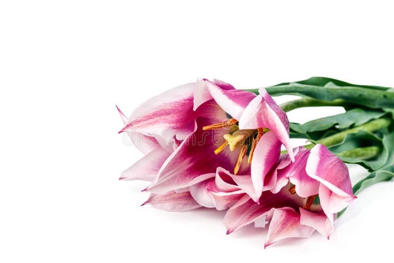 Download 被隔绝的郁金香花 库存照片. 图片 包括有 开花的, 查出, 绿色, 设计, beauvoir, 黄色, 背包 - 72361964