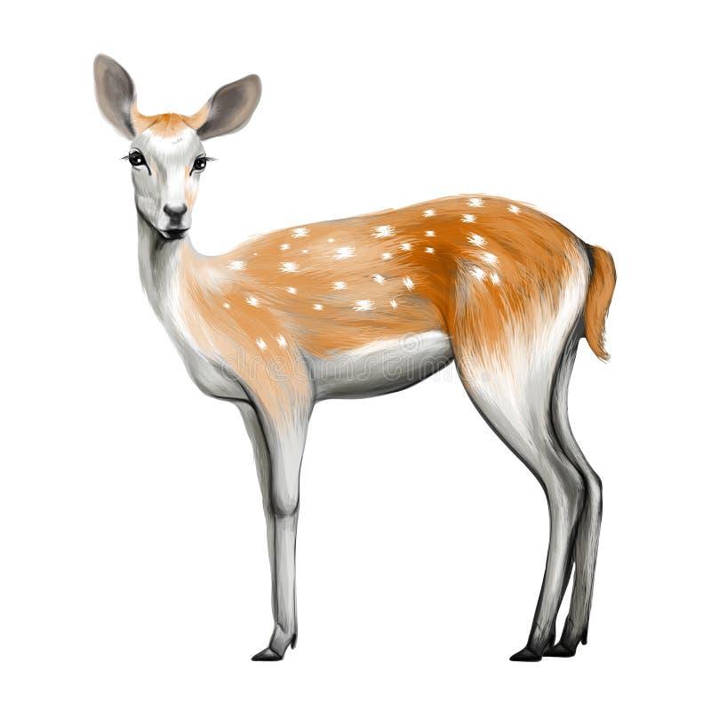 被隔绝的鹿 皇族释放例证