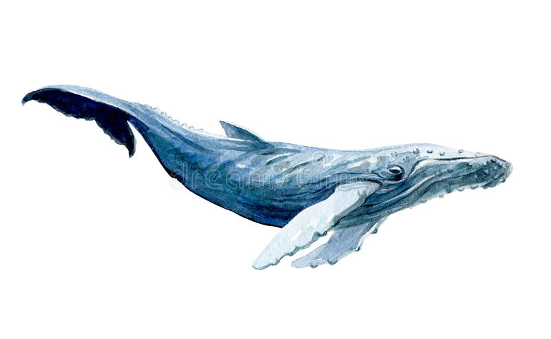 被隔绝的水彩白鲸 库存例证