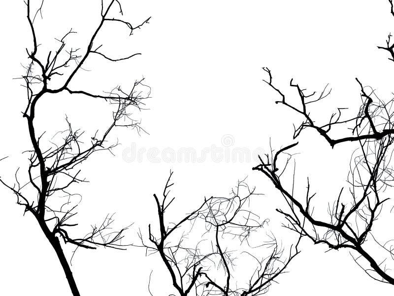 被隔绝的死的树剪影分支 图库摄影