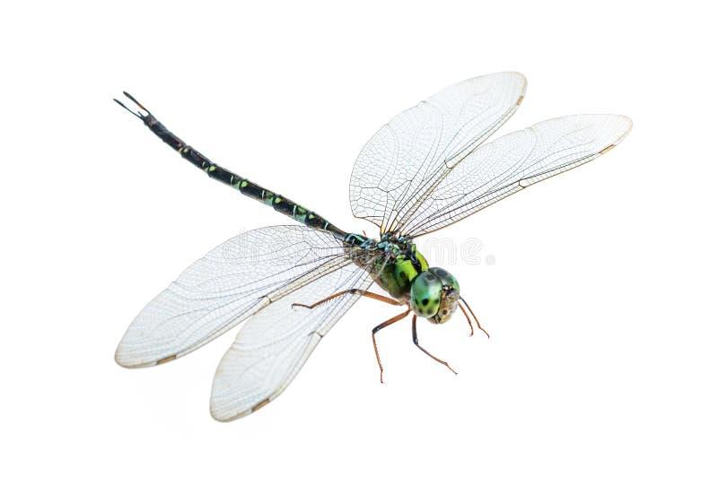 被隔绝的蜻蜓宏指令 图库摄影