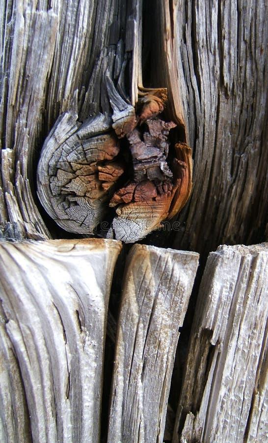 被风化的木头 免版税库存图片