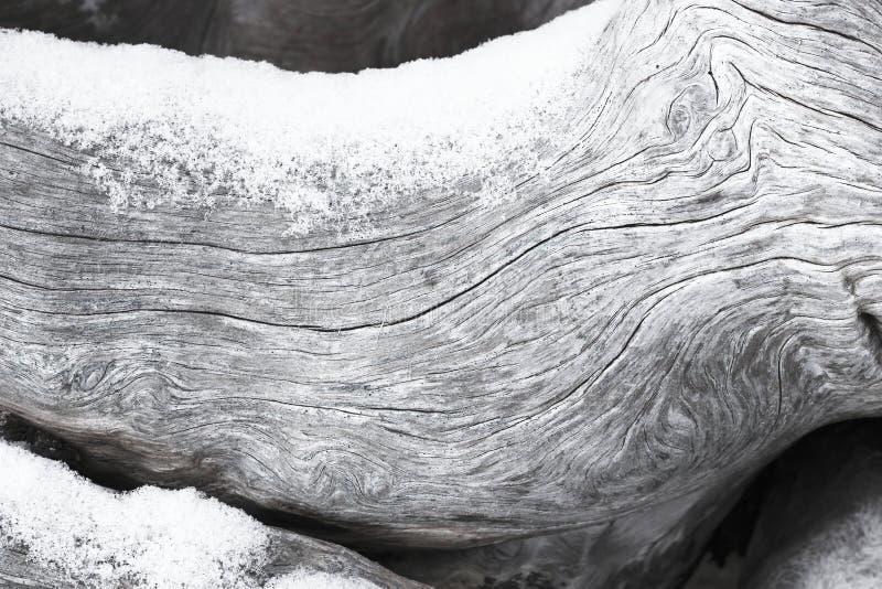 被风化的漂流木头拂去灰尘与雪 免版税库存图片