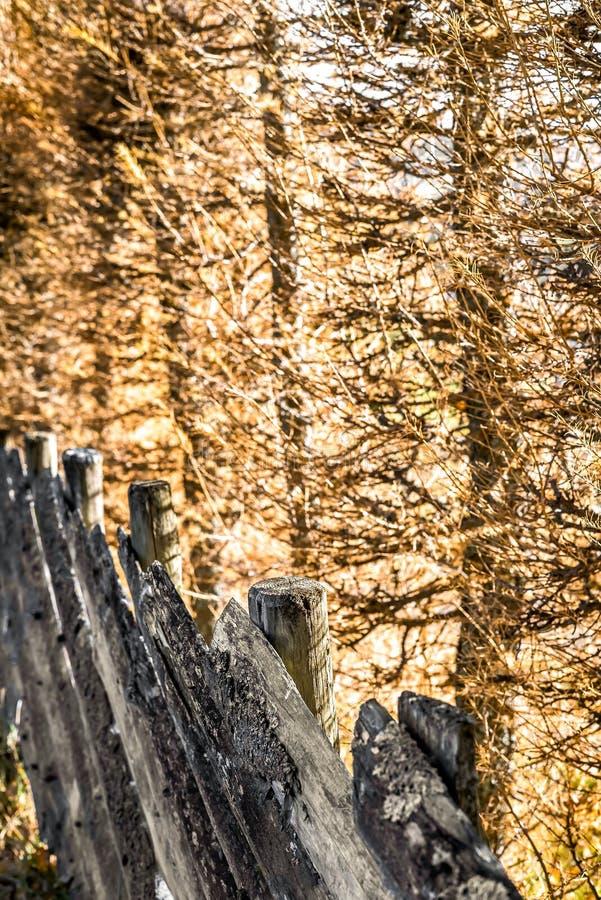 被风化的自然木篱芭在阳光下每新秋天天在乡下的-农村细节一个田园诗村庄 库存图片