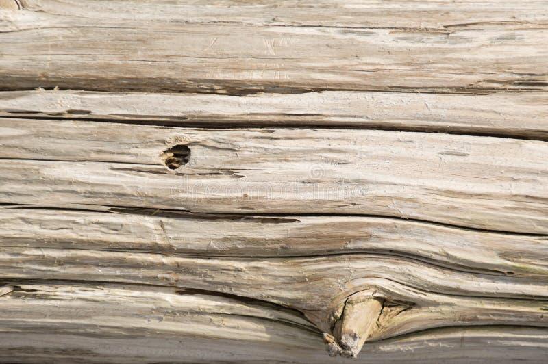 被风化的银色雪松木材木背景墙纸 免版税库存照片