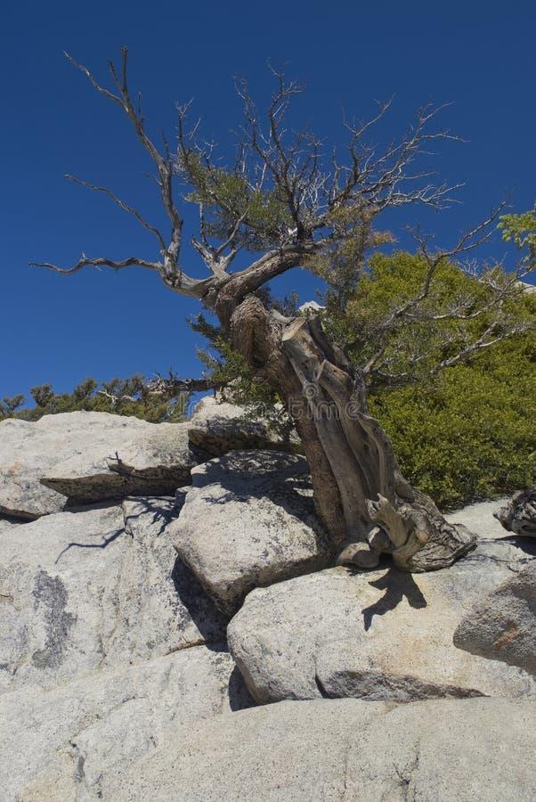 被风化的jacinto ・圣结构树 免版税图库摄影
