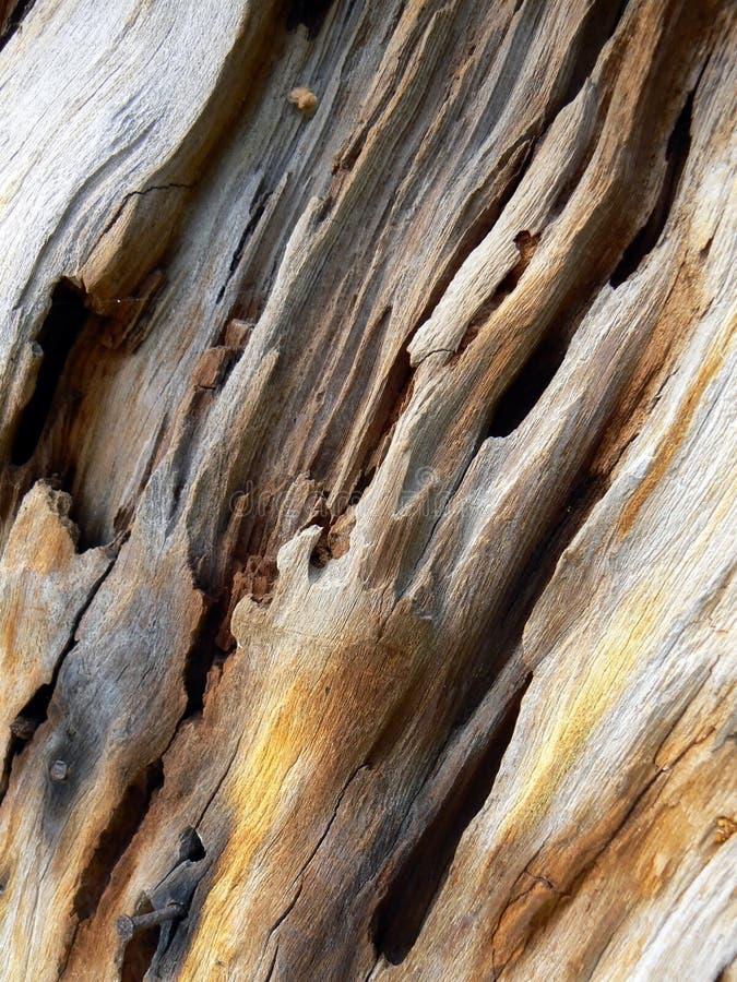 被风化被佩带的结构树 免版税图库摄影