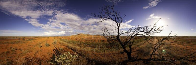 被风吹全景的结构树 库存照片