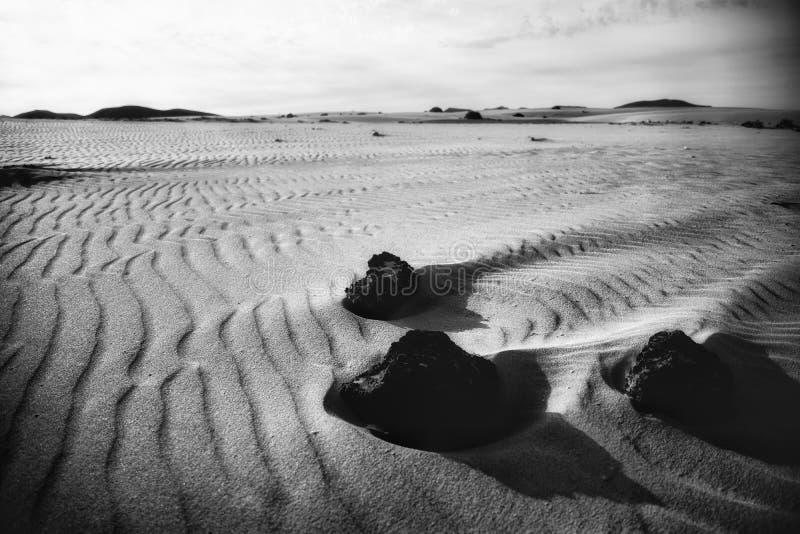 被风吹扫在沙丘中 免版税库存图片