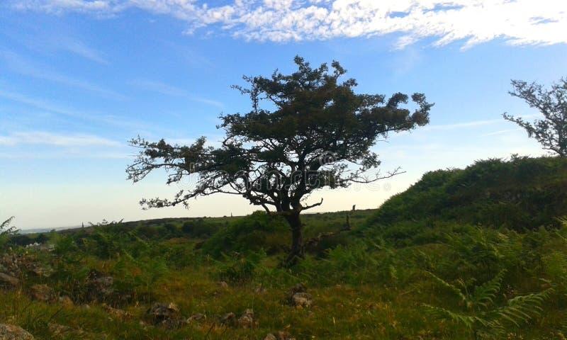 被风吹扫树,博德明停泊,英国 库存照片