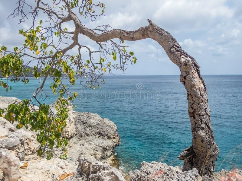 被风吹扫树-库拉索岛景色 库存照片