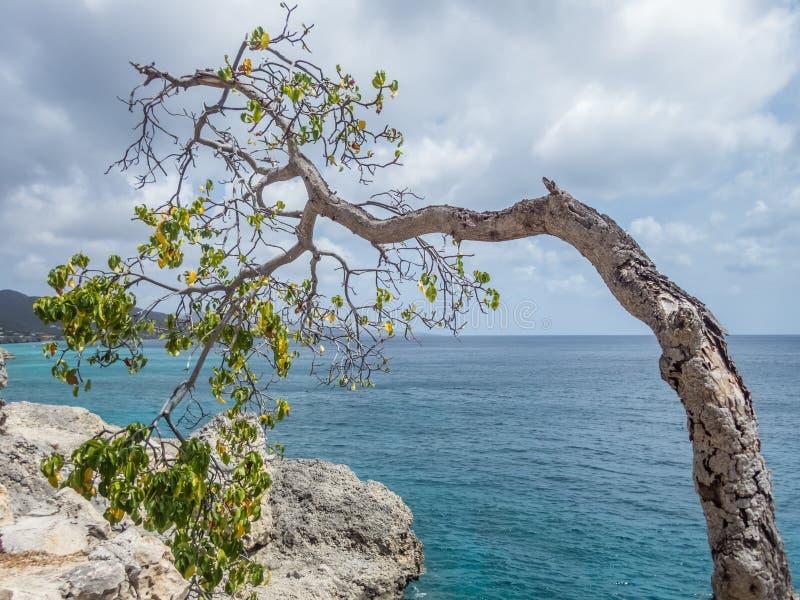 被风吹扫树-库拉索岛景色 库存图片