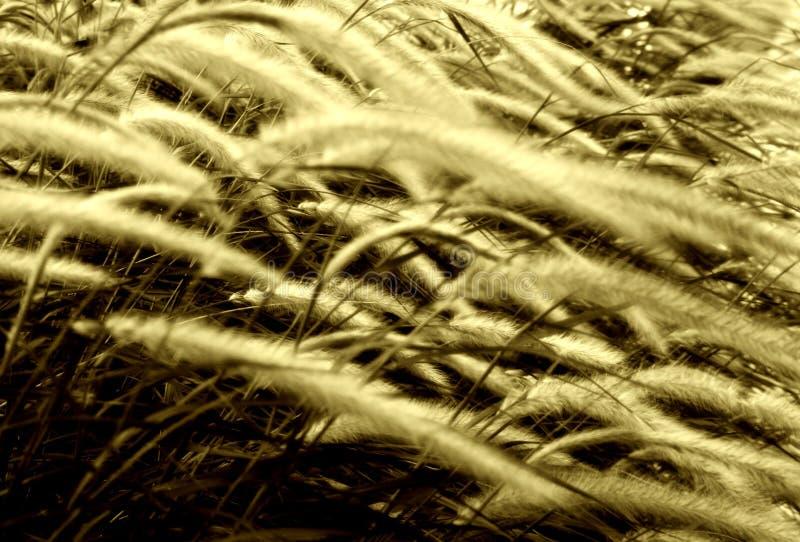 被风吹秋天的草 免版税库存照片