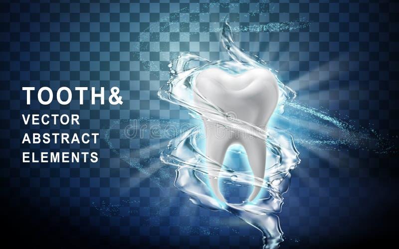 被洗涤的牙模型 库存例证