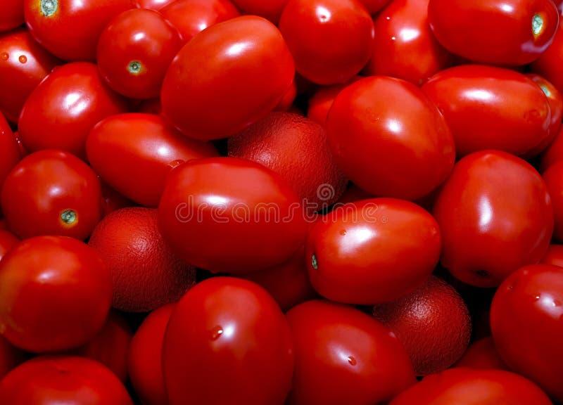 被洗涤的蕃茄 免版税库存图片