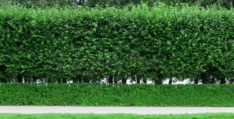 被整理的灌木在公园和轨道 免版税库存图片