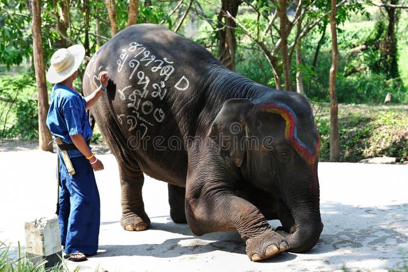 被绘的大象 图库摄影