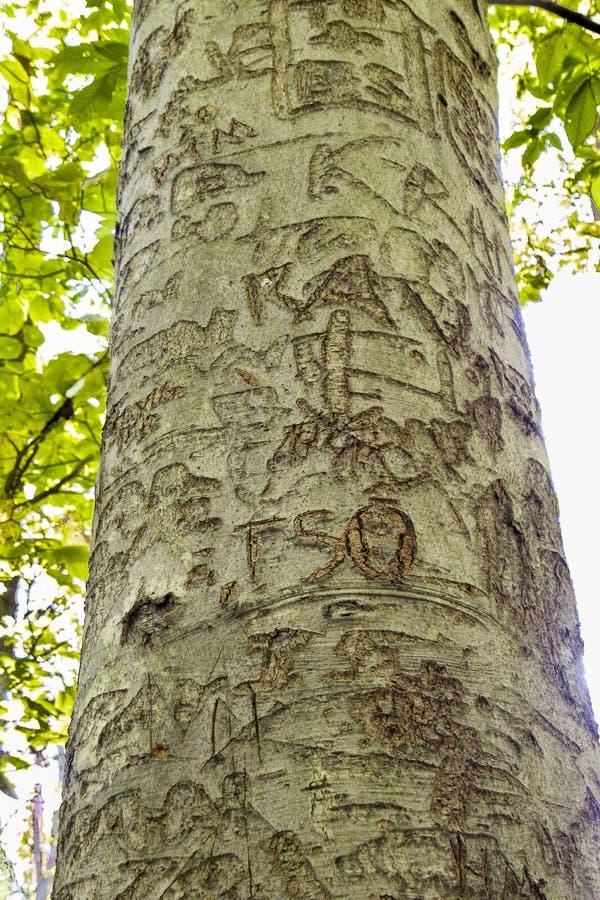 被刻记的海滩树 库存照片