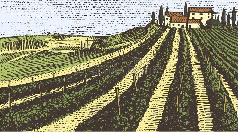 被刻记的葡萄酒,手拉的葡萄园环境美化, tuskany领域、老看的scratchboard或者tatooo样式 向量例证