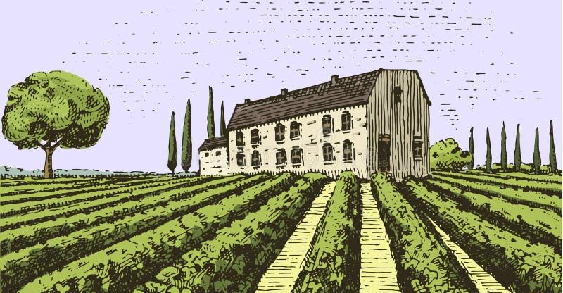 被刻记的葡萄酒,手拉的葡萄园环境美化, tuskany领域、老看的scratchboard或者tatooo样式 库存例证