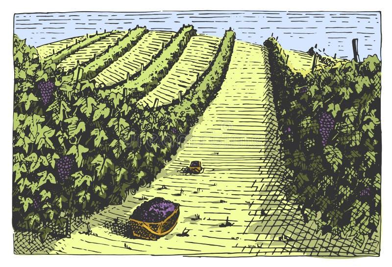 被刻记的葡萄酒,手拉的葡萄园环境美化, tuskany领域、老看的scratchboard或者tatooo样式 皇族释放例证