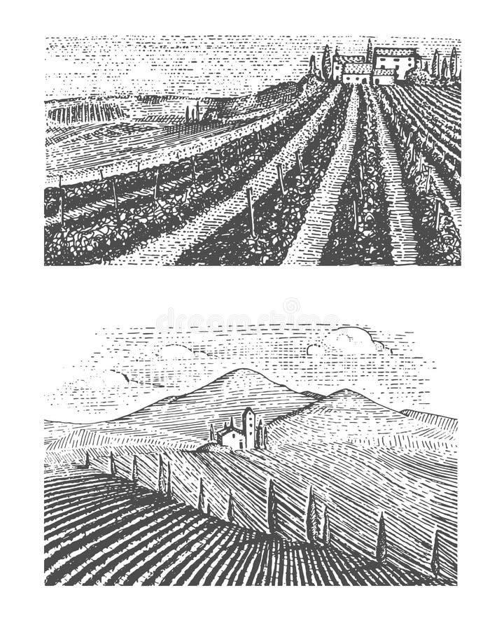 被刻记的葡萄酒,手拉的葡萄园环境美化, tuskany领域,老看的scratchboard 库存例证