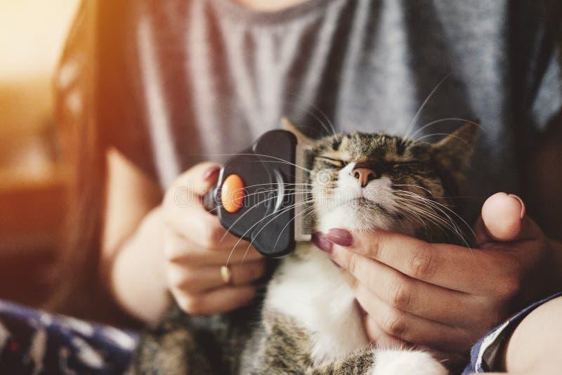 裁减从猫的羊毛,喜欢猫外套,满足了愉快 免版税库存图片
