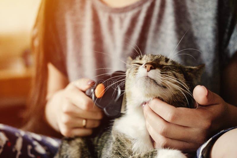 裁减从猫的羊毛,喜欢猫外套,满足了愉快 库存图片