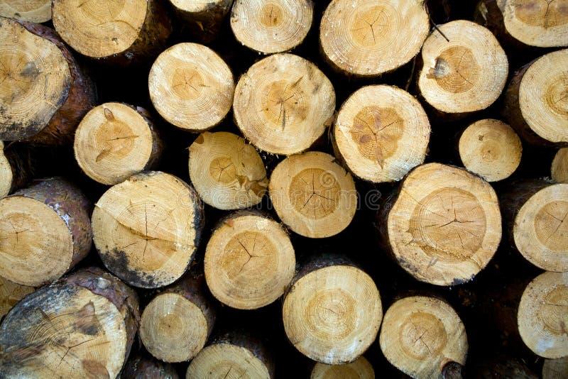 裁减日志被堆的杉木 库存图片