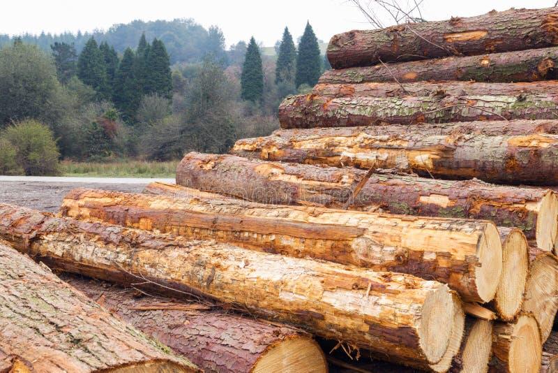 裁减树新近地注册大堆 免版税图库摄影