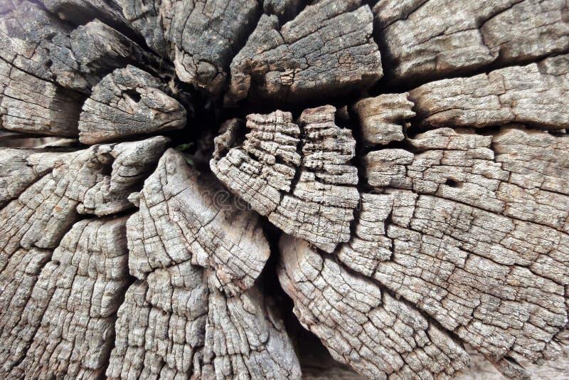 崩裂木头 免版税库存照片