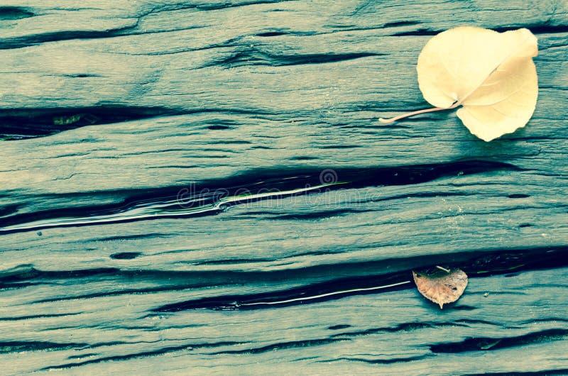 破裂的坚硬木板条有leves背景 库存图片