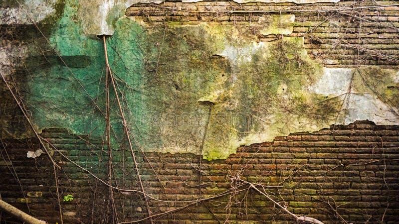 破裂的老用青苔和树盖的砖和混凝土墙t 免版税库存照片