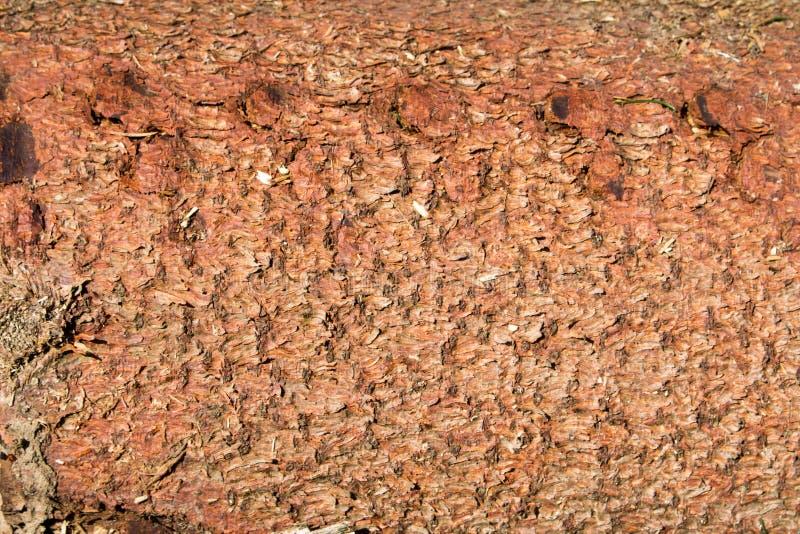 破裂的老纹理木头 免版税库存图片