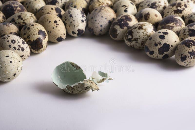 破裂的蛋壳由多个斑点鸡蛋纠缠 免版税库存图片