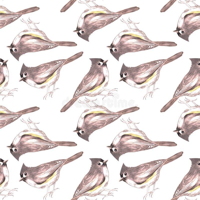 装缨球北美山雀或绘背景的Baeolophus双色的鸟无缝的水彩鸟 皇族释放例证