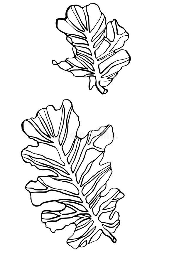 装饰传染媒介墨水图画橡木离开与斑斑 皇族释放例证