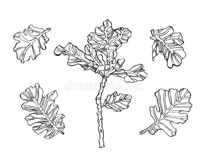 装饰传染媒介橡木分支离开与黑斑斑 库存例证