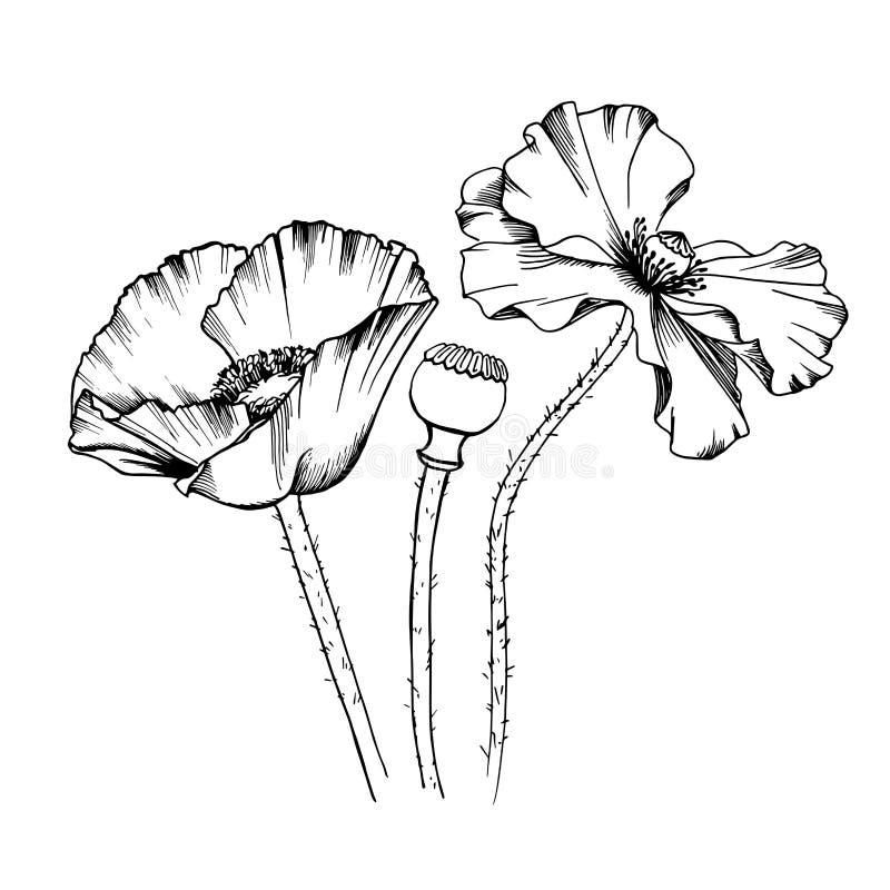 装饰元素集 手拉的传染媒介线艺术树鸦片墨水例证开花花束 画框 向量例证