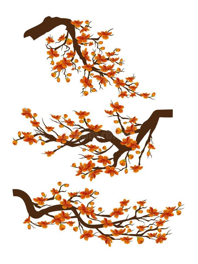装饰分支与花,春天开花佐仓被隔绝的白色背景 中国新年度 皇族释放例证