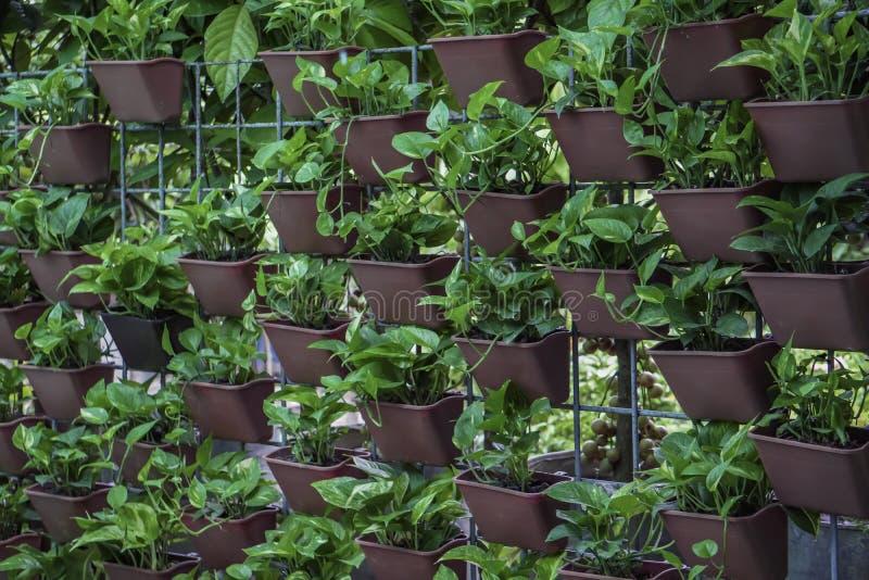 装饰在绿色植物的托儿所墙壁 免版税库存图片