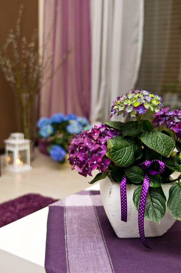 装饰客厅的八仙花属 库存照片